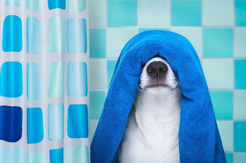 Non-Toxic Pet Guide: Is your home poisoning your pet